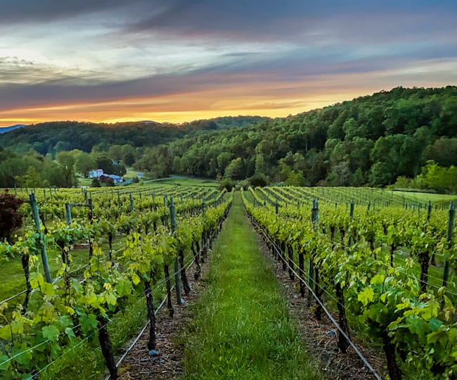 Mountain views and vines for days at Cave Ridge Vineyard in Virginia.