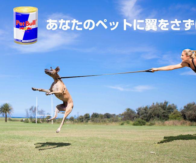 Pet Bull 新発売